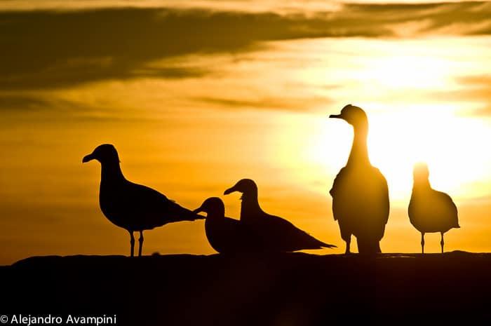 Vogelarten, die auf Vogelinsel Reservat