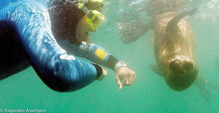 Snorkeling with sea lions in Puerto Madryn Puerto Piramides - Peninsula Valdes