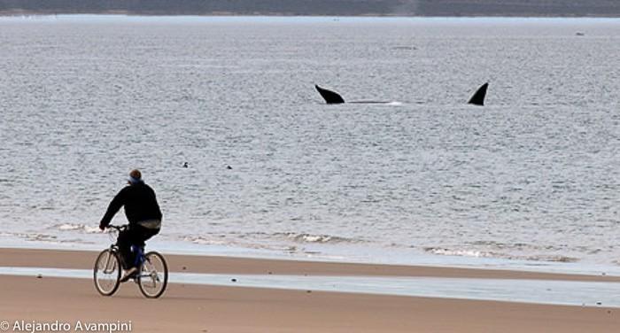 Baleias e Mountainbike em El Doradillo - Puerto Madryn