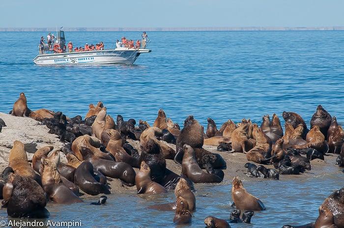Sea lions colony Punta Pirámide - Peninsula Valdes