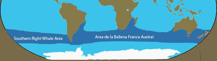 Migration annuelle de la Ballena Franca