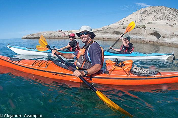 Kajak gevolgd door een groep zeeleeuwen