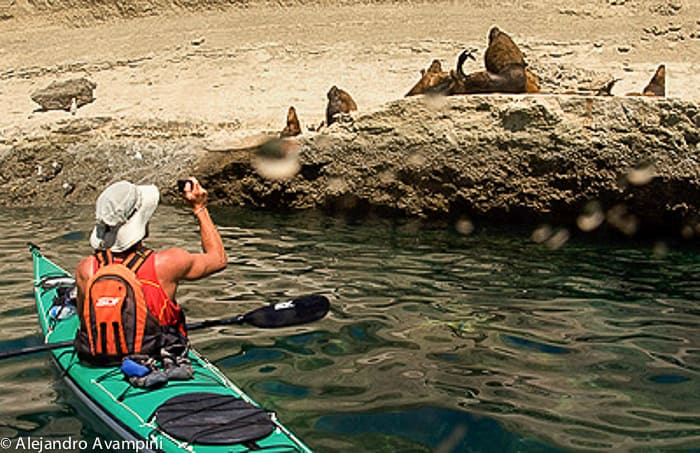 Kayak en Peninsula Valdes - Canoe sea lions colony