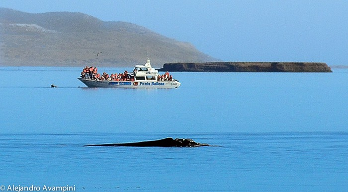 whale_watching_calm