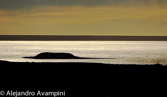 Vogelinsel Reservat Halbinsel Valdes