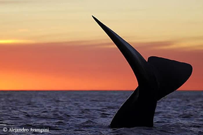 Valdés Schiereiland walvissen kijken