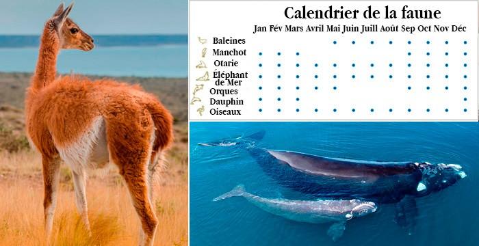calendrier faune peninsule valdes