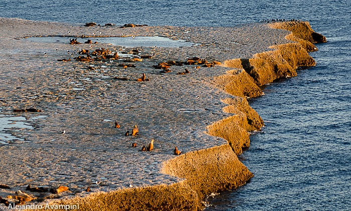 Colony of sea lions Punta Piramide Peninsula Valdes