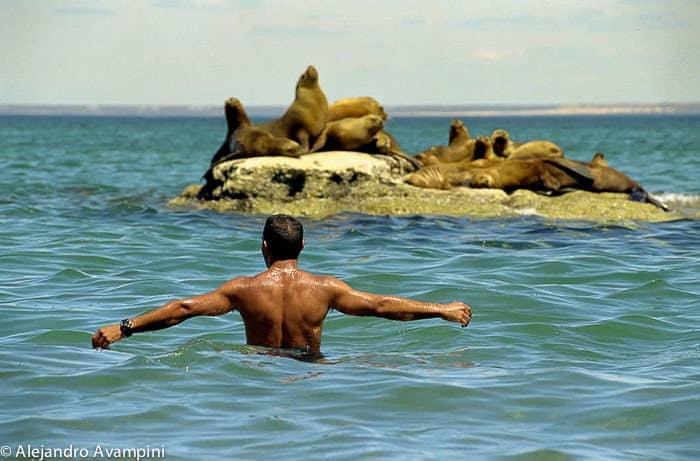 Nadando com leões marinhos na Peninsula Valdes
