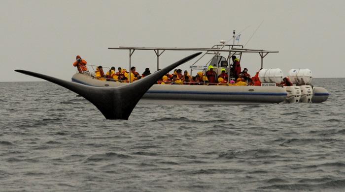 Geburt des Wals