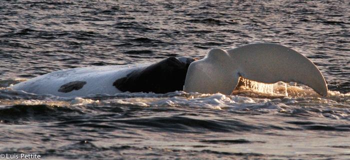 Nascimento da Baleia na Península Valdés