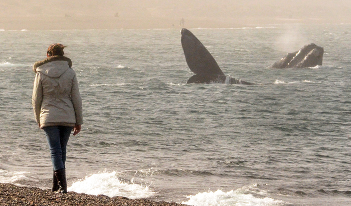 Whale Puerto Madryn