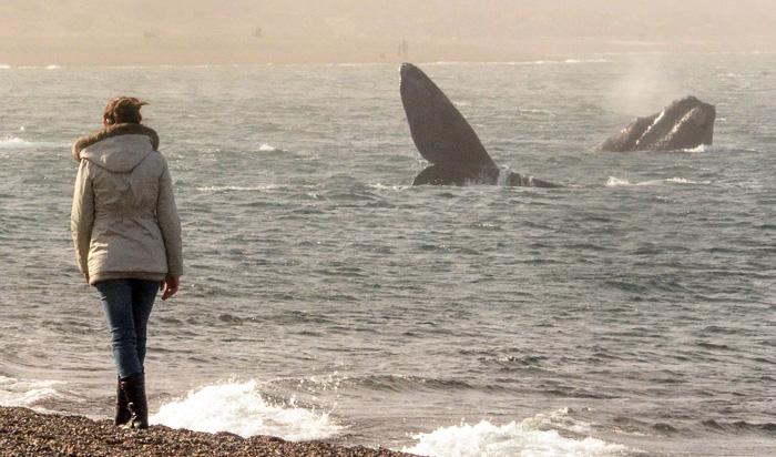 Walbeobachtung vom Strand