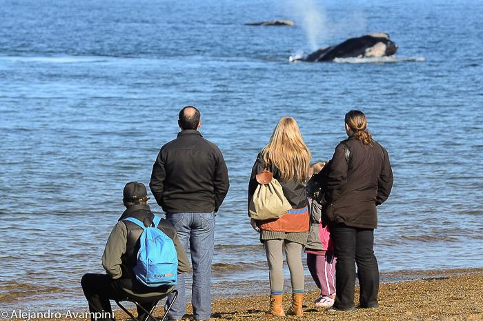 Whale watching El doradillo Puerto Madryn
