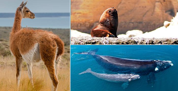 Einige Tiere der Halbinsel Valdes