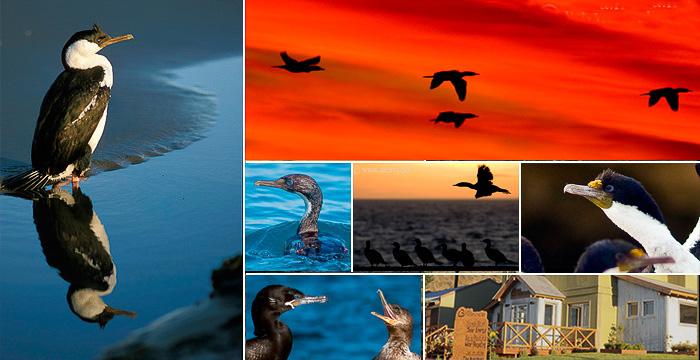 Aves en la Isla de los Pájaros Peninsula Valdes