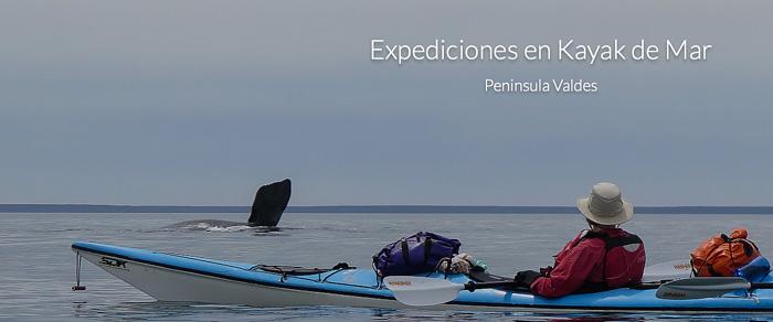 Kayak en temporada de Ballenas en Puerto Piramides