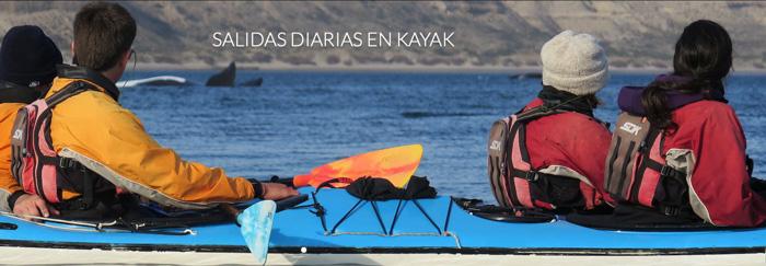 kayak con ballenas en Peninsula Valdes