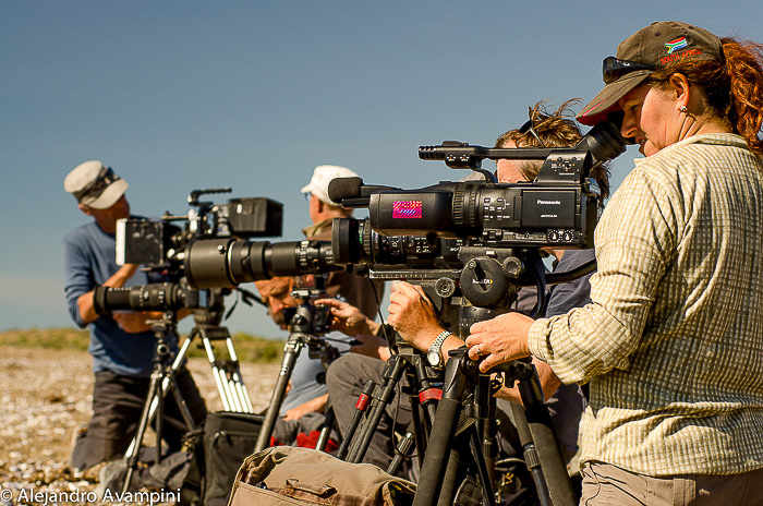 Fotógrafos no canal de ataque Orcas