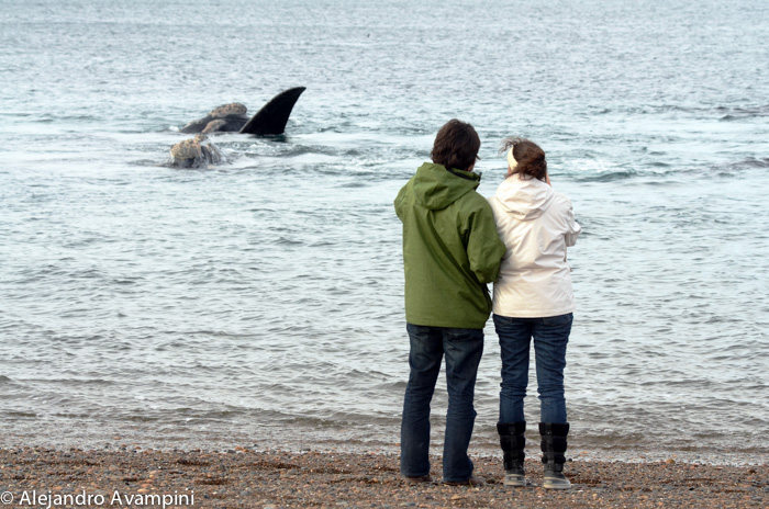 Whale watching in El Doradillo Beach of Puerto Madryn