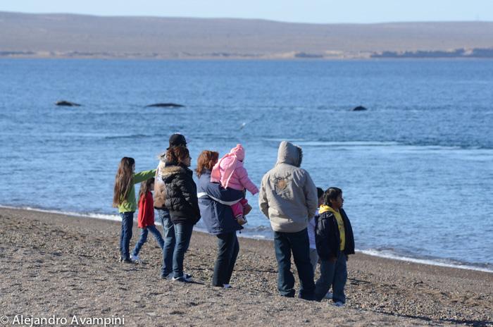 Walbeobachtung am Strand von El Doradillo, Puerto Madryn