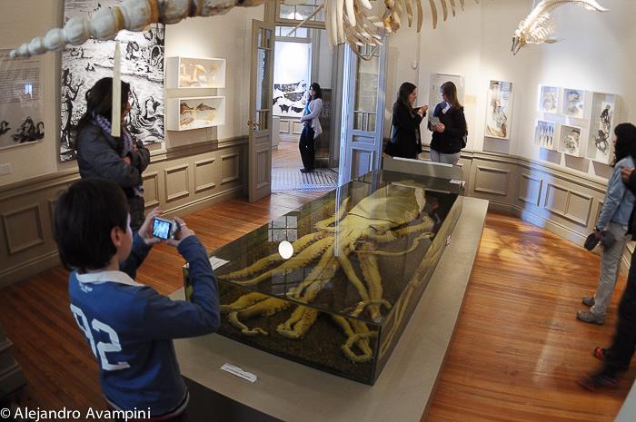 Provinzmuseum des Menschen und des Meeres Puerto Madryn