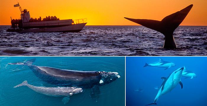 Walvissen kijken op het Valdes schiereiland Patagonië Argentinië