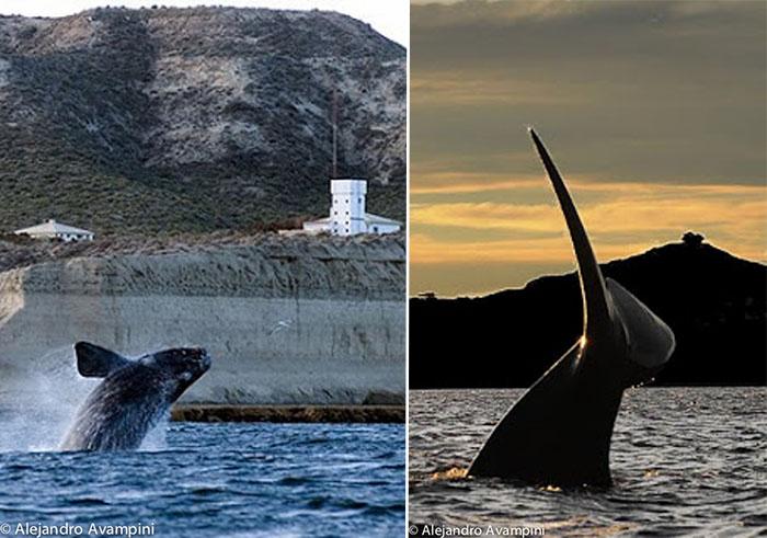 Punta Piramide en saison des baleines