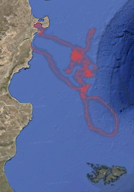 Annual migration of the Right Whale