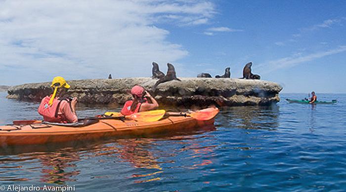 kayak around sea lions colony punta Piramide