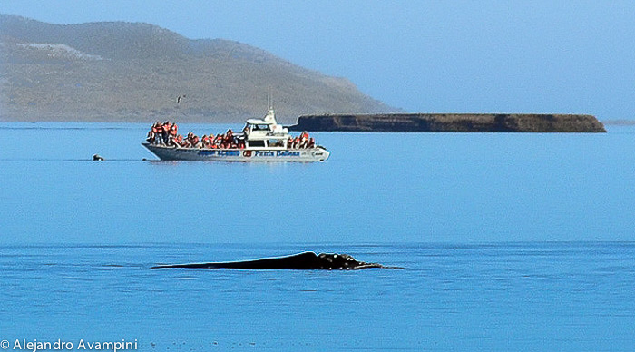 Walbeobachtung - Halbinsel Valdes