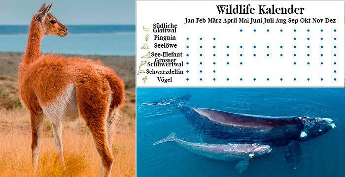 Wildlife Kalender Halbinsel Valdes