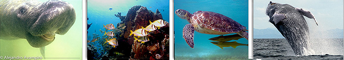 Photography of marine fauna in the Caribbean sea