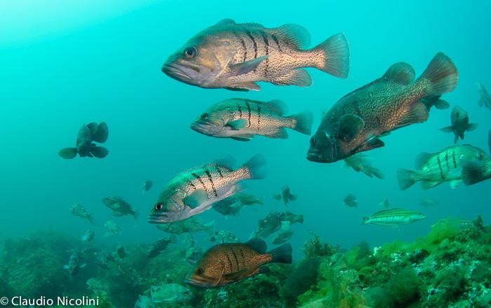 Diving in Puerto Pirámides Peninsula Valdes