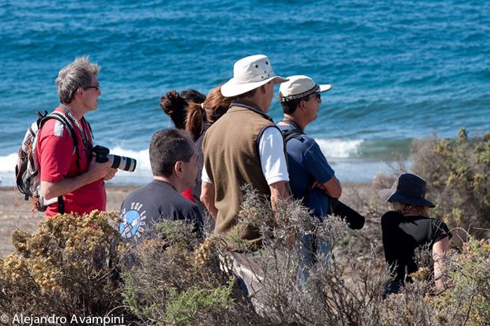 orcas em Peninsula Valdes