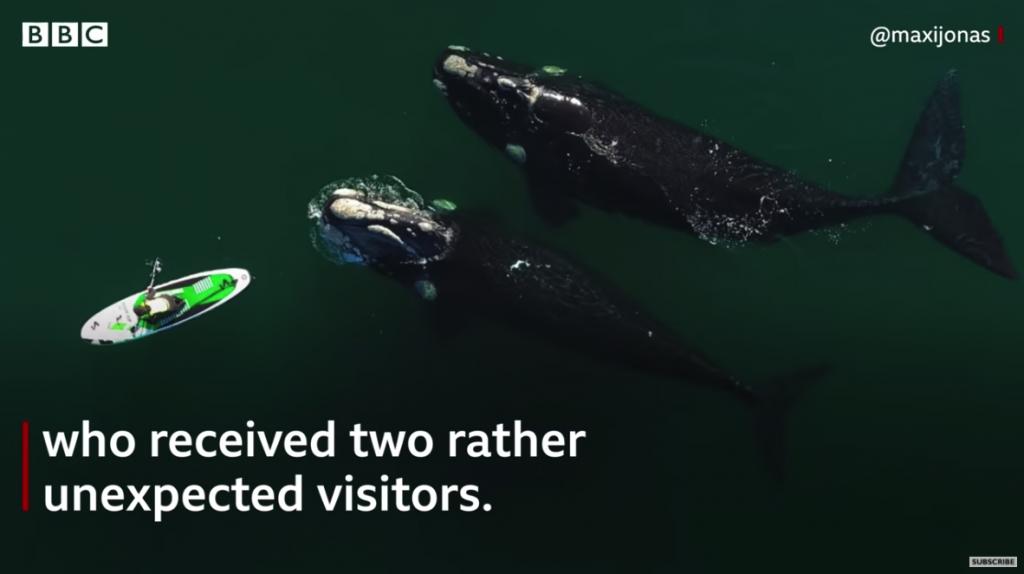 paddling between whales in puerto madryn