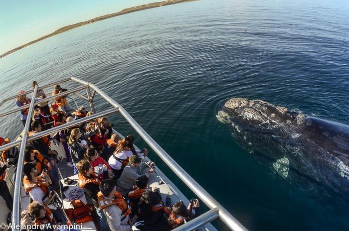 Avistaje de ballena embarcado desde Puerto Piramides Península Valdés