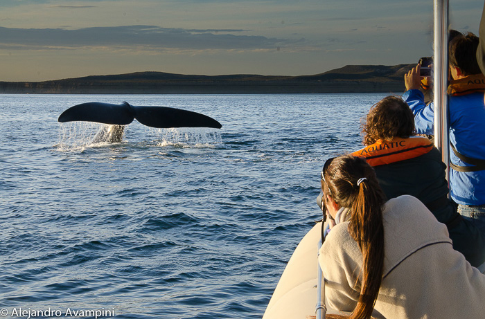 Whale watching Valdes Peninsula - Photo tips