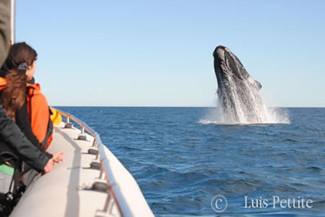 Precios avistaje de ballenas 2018