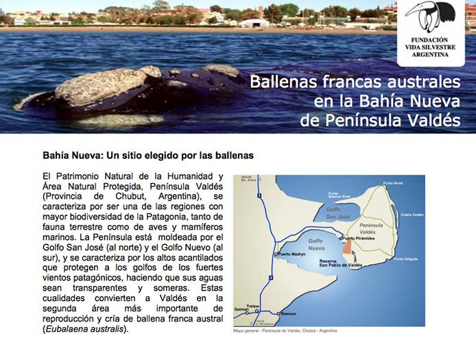 ballena_bahia_nueva