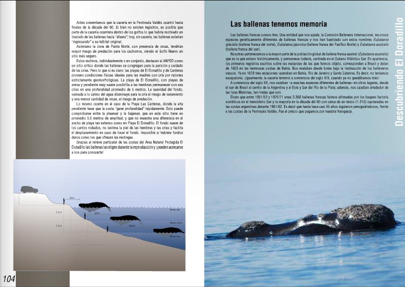 Guia de el Doradillo Ballenas Puerto Madryn