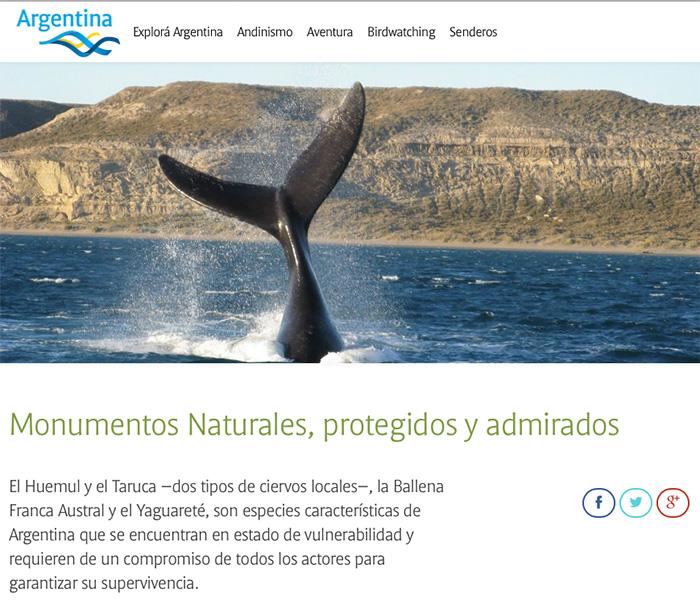 ballenas en viaje migratorio
