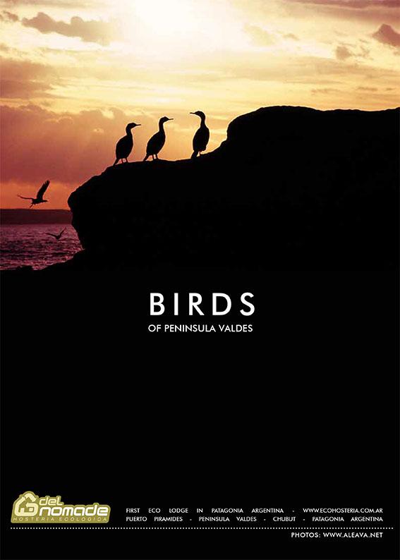 Birds of Valdes Peninsula - Argentine Patagonia
