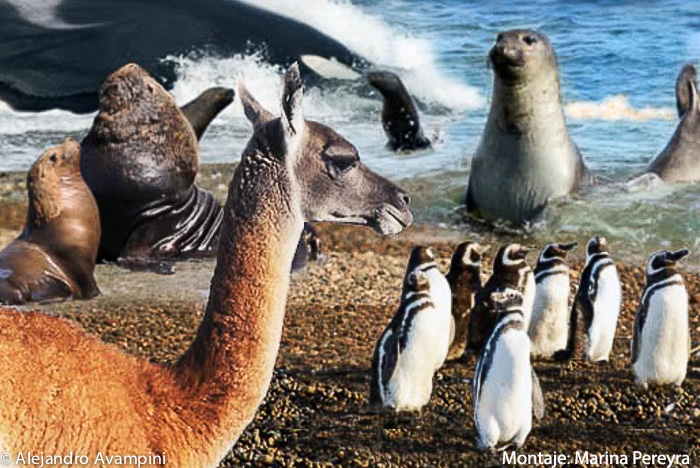Peninsula Valdes Wildlife - Animals of Patagonia