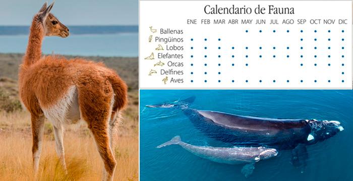 Calendario de Fauna Peninsula Valdes - Patagonia Argentina