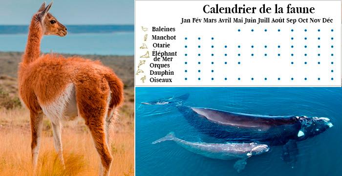 calendrier de la fauna péninsule valdes