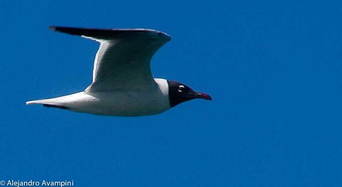 Insel der Vögel Reservat von Anfang an