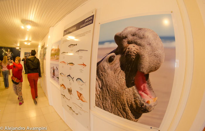 Fotos elefante marino peninsula valdes