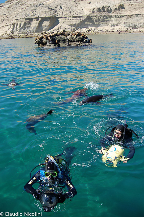 Dive scuba with sea lions Puerto Madryn y Puerto Piramides