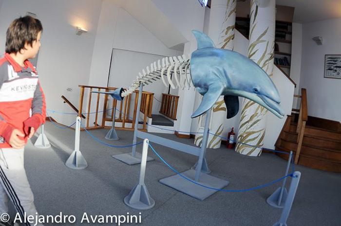Ecocentro delfin en puerto madryn